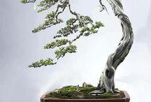 Bonsai bonsai bonsai / Teeny weeny trees / by Dean Marriner
