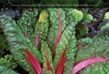 garden ideas / organic & sustainable gardening, gardening tips, pest control, beautiful gardens, permaculture