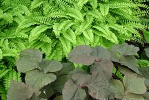 Plants: Ferns in Combinations / Plant partnerships that include ferns