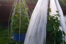 идеи огорода