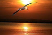 Sunsets - Sunrises