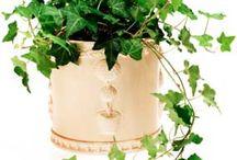 Allergisille parhaiten sopivat kasvit