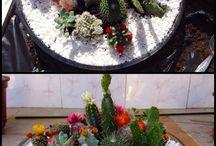 Kaktusy,sukulenty