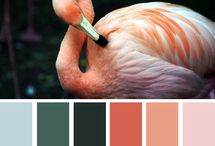 Colours / Colour combo's for craft. / by Robyn Wallace