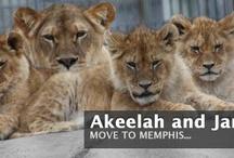 Zoos & Wildlife
