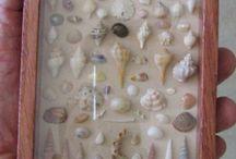 Cosas para hacer con caracoles de mar