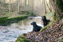 North Wales Pet Photographer