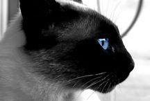 Állatok/Animals / Fotók állatokról.