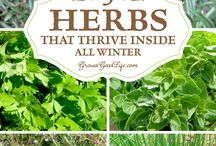 Herb Gardening / Helpful tips and tricks for growing healthy herbs year-round