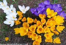 Flowers *_*
