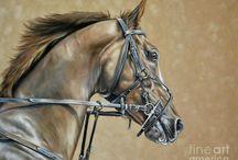 Paarden ❤️