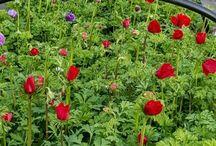 Our Little Flower Farm / Snapshots of a flower farm in the Willamette Valley of Oregon.