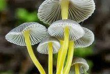 Mushroom Wonders