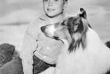 "Lassie Photos / ""Once upon a time there was a beautiful collie named Lassie...and, with Lassie, once upon a time is forever."""