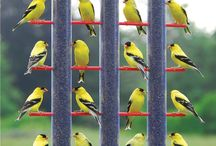 Birds / by Melissa Nicholson