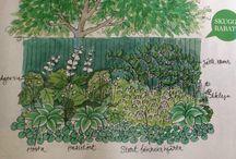 Växter för skugga