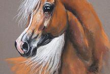 kuru boya atlar -gözler