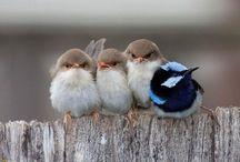 Lovely things : Birds