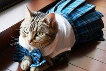 catsperation / cats! cats! cats!