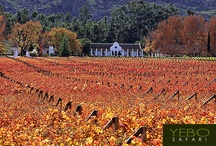 Wine, food & culture by YEBO Safari / One of the most exciting and flavorful experience by YEBO Safari through the Winelands in South Africa