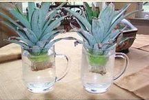 Rozmnožovanie rastlín