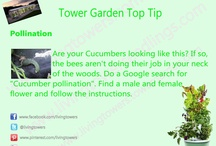 Tower Garden Top Tips! / Weekly tips to help you get the most out of your Tower Garden! / by Living Towers
