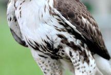 Spændende Fugle / Fugle