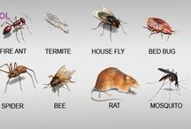 Pest / Pest control refers to the regulation or management of a species defined as a pest, and can be perceived to be detrimental to a person's health, the ecology or the economy. A practitioner of pest control is called an exterminator. Here we upload pest images and tips of pest control.