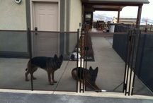 Dog Safety / Pet safety around the home. Dog Pool safety, driveway safety