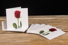 Greeting Cards - Blank Photo Cards / These are some greeting card sets we offer in our Etsy store!