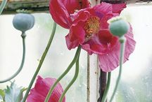 """Poppies / more for the """"to do"""" list"""