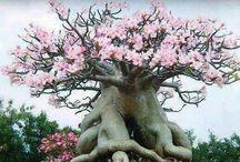 bequtiful  tree