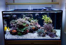 Reef Aquariums