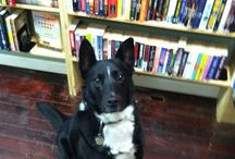 Bookstore Pets / Meet the mascots of The Dog Eared Book!