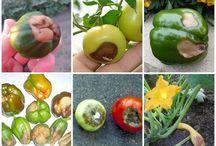 Zöldség tápanyag
