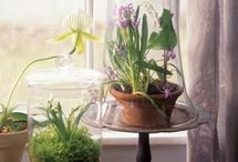 Jardin = Terrarium