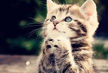 ❤ Cats/Kittens ❤