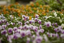 Goodies at Clifton Nurseries / We have the most wonderful selection of plants, pots and the finest gardening products to inspire you.