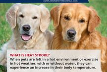 Pet Heatstroke Prevention / What is heat stroke? When pets are left in a hot environment or exercise in hot weather they can experience an increase in body temperature. As their body temperature rises, they will begin to pant, act lethargic, become restless and experience heat stress.  They can start to stagger, their gums may be bright red or purple, and begin to have blood in their stool. If heatstroke is left untreated, multi-organ failure and death may result.