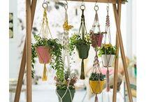 Plant hangers. Location ideas