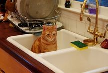 Cats =^..^= In Sinks / In a cat's eye, everything belongs to cats. That includes, well, everything - including your sink.  / by Joan Halbig
