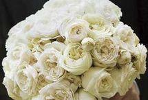 Wedding Ideas / Whites, champagne & gold