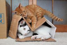 Gatitos, gatos