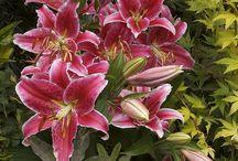 Paradise Favorite Flowers ♕ / by Erika Moore