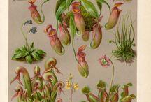 растения ;3
