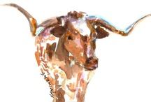 my longhorns / by Jamie Shew Cook