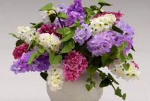 miniatüre virág