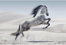 Pferde bilder
