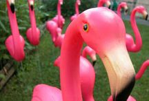 pink flamingos / by Tonia Doyle