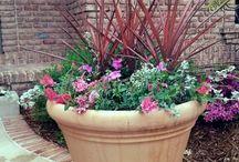 Potted Design / Decorative flowering pots